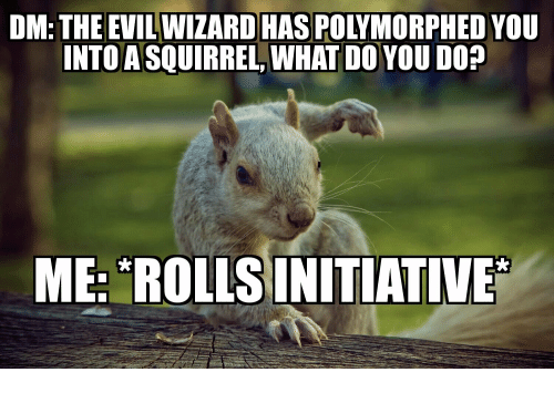 dm the evil wizard has polymorphed you into a squirrel 31226774 dm the evil wizard has polymorphed you into a squirrel what do you