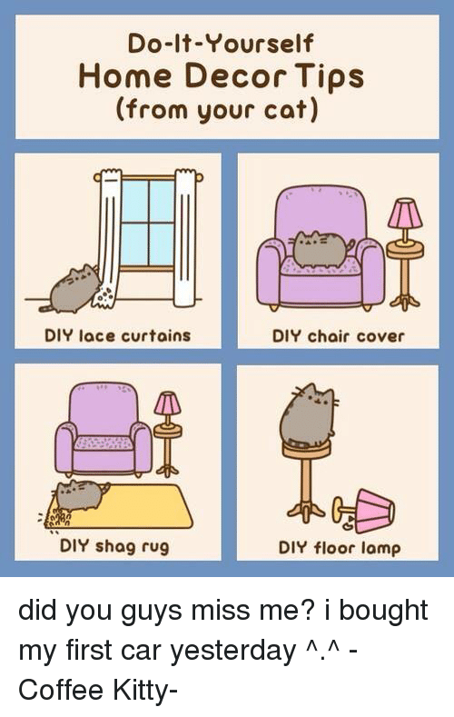 Do it yourself home decor tips from your cat diy lace curtains diy kitties memes and coffee do it yourself home decor tips solutioingenieria Gallery