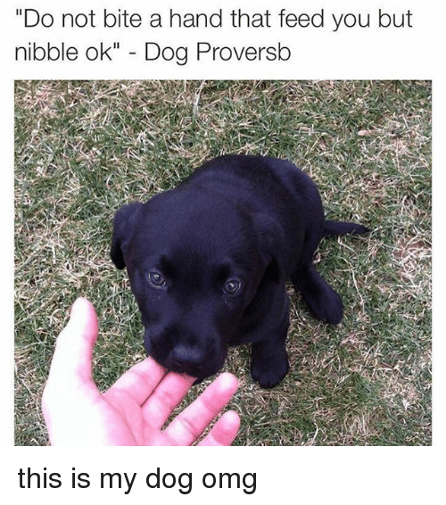 "Memes, Omg, and 🤖: ""Do not bite a hand that feed you but  nibble ok"" - Dog Proversb this is my dog omg"