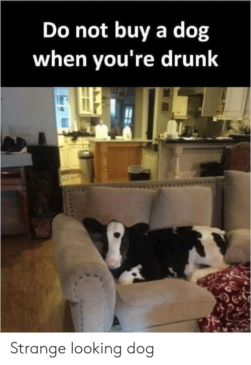 25 Best Memes About Drunk, Sex, And Tumblr  Drunk, Sex -3645