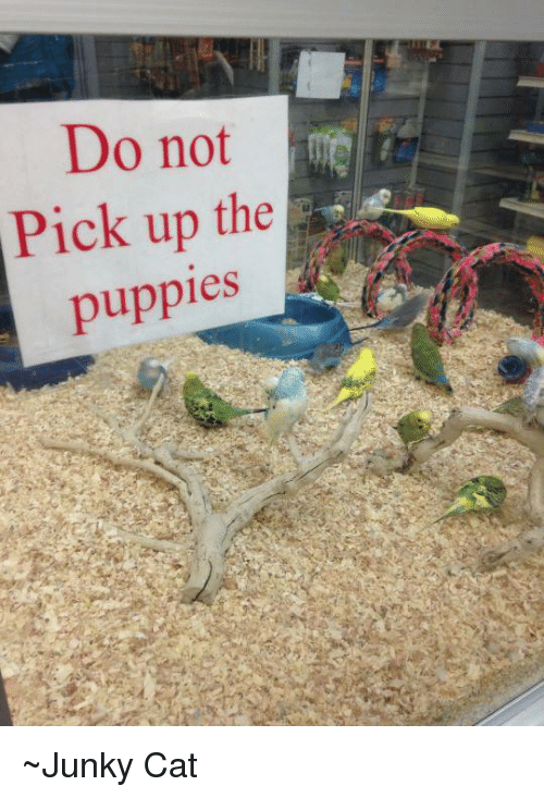 Dank, Puppies, and Puppy: Do not  Pick up the  puppies ~Junky Cat