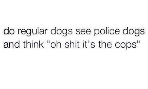 """Dank, Dogs, and Police: do regular dogs see police dogs  and think """"oh shit it's the cops"""""""