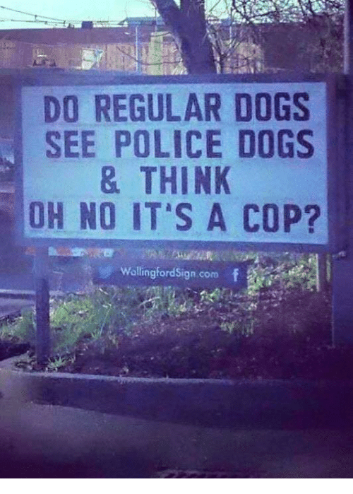 Dogs, Memes, and Police: DO REGULAR DOGS  SEE POLICE DOGS  & THINK  OH NO IT S A COP?  WallingfordSign.com f