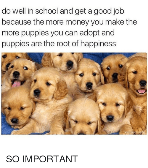 Money, Puppies, and School: do well in school and get a good job  because the more money you make the  more puppies you can adopt and  puppies are the root of happiness SO IMPORTANT