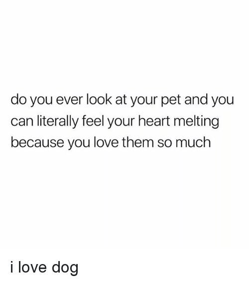 Love, Tumblr, and Heart: do you ever look at your pet and you  can literally feel your heart melting  because you love them so much i love dog
