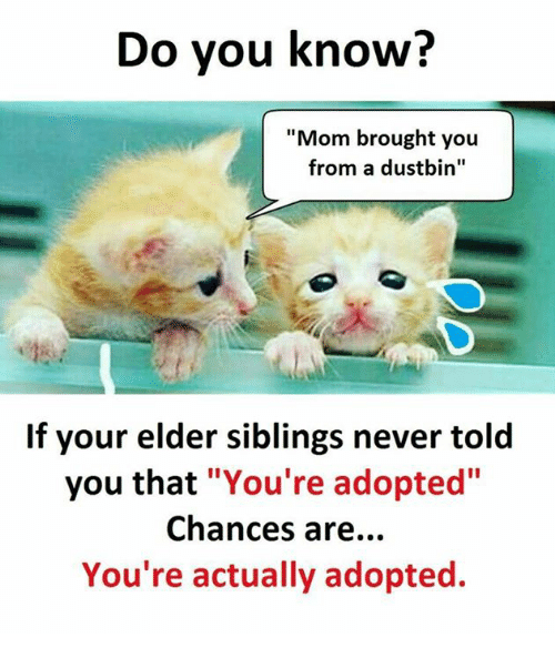 "Memes, Never, and Mom: Do you know?  ""Mom brought you  from a dustbin""  If your elder siblings never told  you that ""You're adopted""  Chances are...  You're actually adopted."