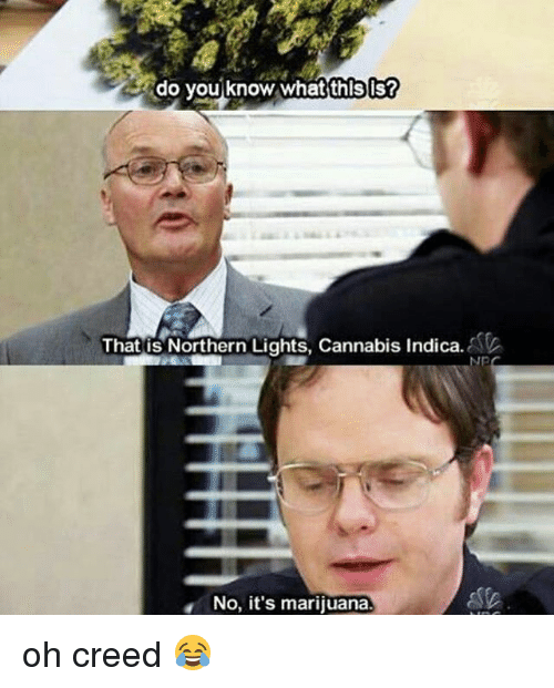 Memes, Creed, and Marijuana: do you know what'thlsis?  Thatis Northern Lights, Cannabis Indica.  That is Northern Lights, Cannabis Indica.  No, it's marijuana. oh creed 😂