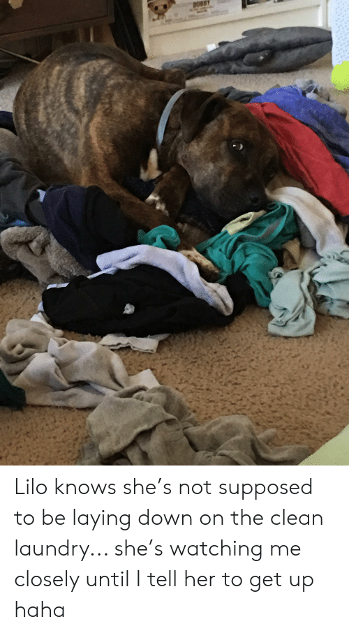 Laundry, Haha, and Her: DOBBY Lilo knows she's not supposed to be laying down on the clean laundry... she's watching me closely until I tell her to get up haha