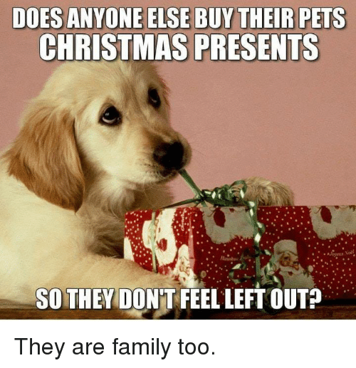Christmas, Dank, and Family: DOES ANYONE ELSE BUY THEIR PETS  CHRISTMAS PRESENTS  SO THEY DON'T FEEL LEFT OUT? They are family too.