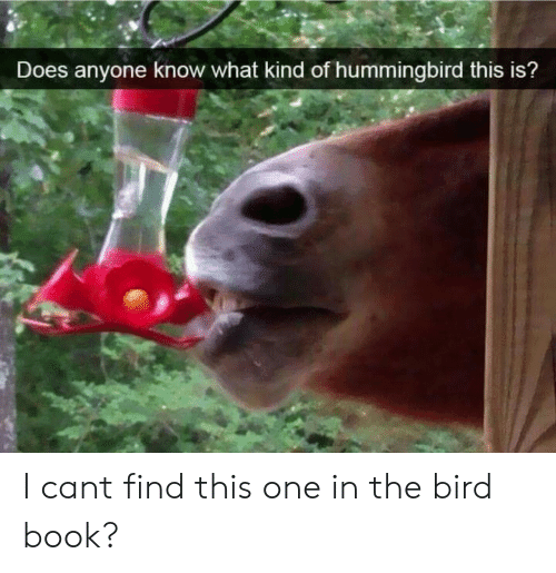 Book, Hummingbird, and Anyone Know: Does anyone know what kind of hummingbird this is? I cant find this one in the bird book?