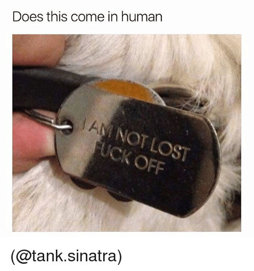 Dank Memes, Human, and Tank: Does this come in human  No  OFF (@tank.sinatra)