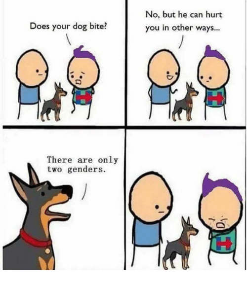 does your dog bite there are only two genders no 12459591 ✅ 25 best memes about does your dog bite does your dog bite memes,Does Your Dog Bite Meme
