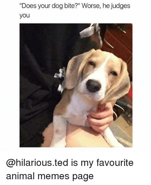 "Memes, Ted, and Animal: ""Does your dog bite?"" Worse, he judges  you @hilarious.ted is my favourite animal memes page"
