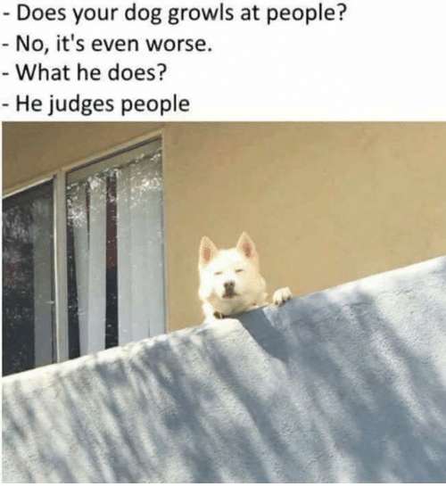 Dog, What, and Dogging: Does your dog growls at people?  No, it's even worse.  What he does?  He judges people