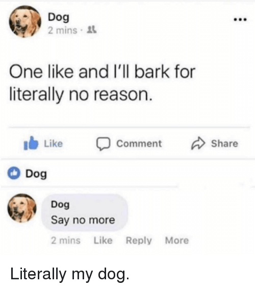 Memes, Say No More, and Reason: Dog  2 mins  One like and I'll bark for  literally no reason  Ib Like comment Share  Dog  Dog  Say no more  2 mins Like Reply More Literally my dog.