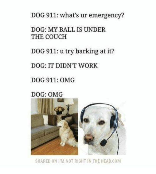 funny ball and heading dog 911 what s ur emergency dog my ball