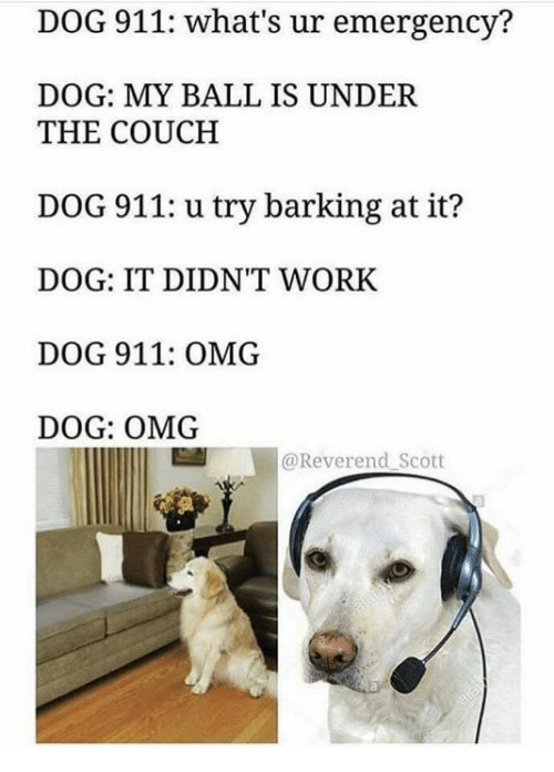 Omg, Work, and Couch: DOG 911: what's ur emergency?  DOG: MY BALL IS UNDER  THE COUCH  DOG 911: u try barking at it?  DOG: IT DIDN'T WORK  DOG 911: OMG  DOG: OMG  @Reverend Scott