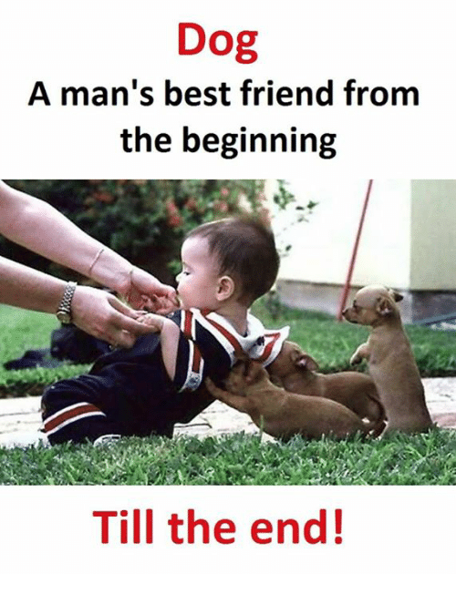 Best Friend, Best, and Dog: Dog  A man's best friend from  the beginning  Till the end!