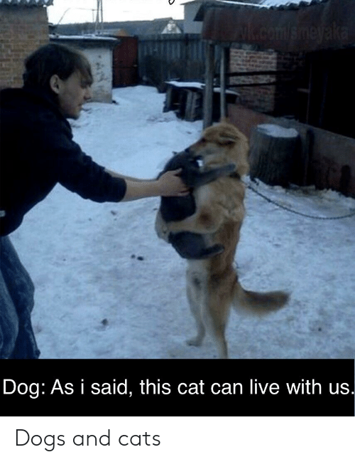 Dog as I Said This Cat Can Live With Us Dogs and Cats | Cats