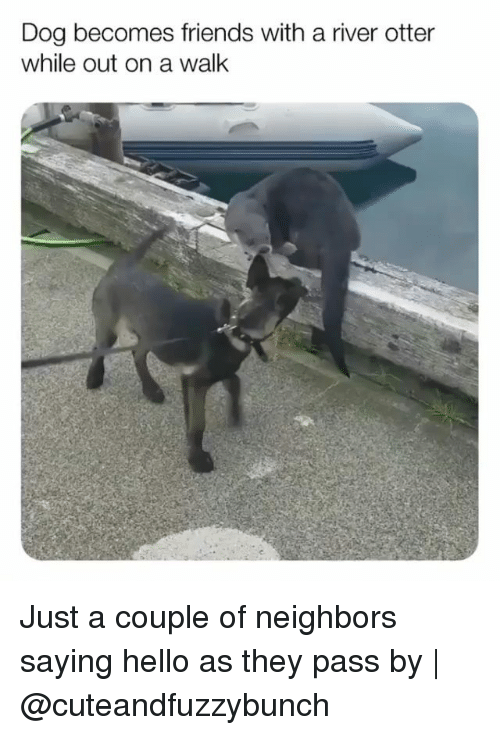 Friends, Hello, and Memes: Dog becomes friends with a river otter  while out on a walk Just a couple of neighbors saying hello as they pass by   @cuteandfuzzybunch