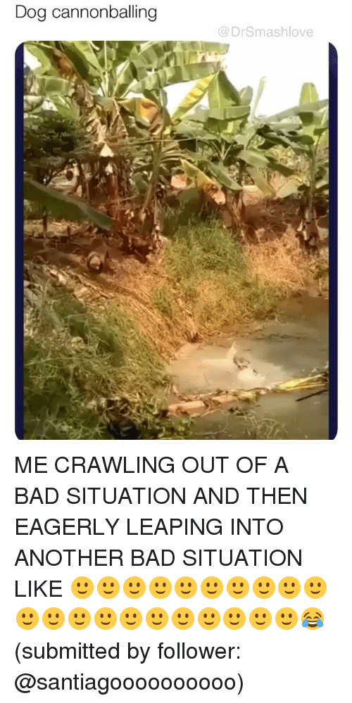 Bad, Memes, and 🤖: Dog cannonballing  @DrSmashlove ME CRAWLING OUT OF A BAD SITUATION AND THEN EAGERLY LEAPING INTO ANOTHER BAD SITUATION LIKE 🙂🙂🙂🙂🙂🙂🙂🙂🙂🙂🙂🙂🙂🙂🙂🙂🙂🙂🙂🙂🙂😂 (submitted by follower: @santiagoooooooooo)