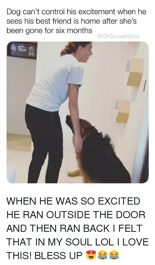 Best Friend, Bless Up, and Lol: Dog can't control his excitement when he  sees his best friend is home after she's  been gone for six months  @DrSmashlove WHEN HE WAS SO EXCITED HE RAN OUTSIDE THE DOOR AND THEN RAN BACK I FELT THAT IN MY SOUL LOL I LOVE THIS! BLESS UP 😍😂😂