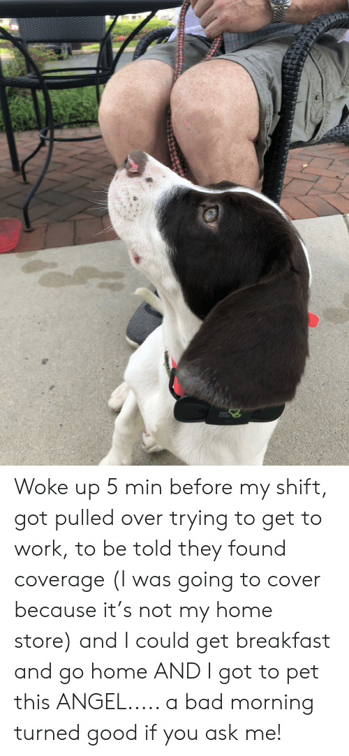 Bad, Work, and Angel: DOG  CARE Woke up 5 min before my shift, got pulled over trying to get to work, to be told they found coverage (I was going to cover because it's not my home store) and I could get breakfast and go home AND I got to pet this ANGEL..... a bad morning turned good if you ask me!