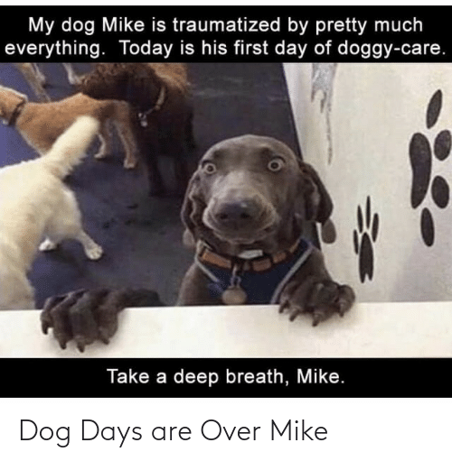Dog Days Are Over Mike Dog Meme On Me Me