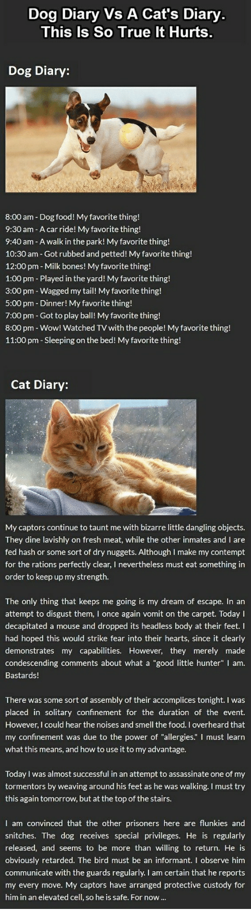 """Bones, Cats, and Food: Dog Diary Vs A Cat's Diary  This Is So True It Hurts  Dog Diary:  8:00 am Dog food! My favorite thing!  9:30 am - A car ride! My favorite thing!  9:40 am A walk in the park! My favorite thing!  10:30 am - Got rubbed and petted! My favorite thing!  12:00 pm - Milk bones! My favorite thing!  1:00 pm Played in the yard! My favorite thing!  3:00 pm Wagged my tail! My favorite thing!  5:00 pm Dinner! My favorite thing!  7:00 pm - Got to play ball! My favorite thing!  8:00 pm-Wow! Watched TV with the people! My favorite thing!  11:00 pm Sleeping on the bed! My favorite thing!  Cat Diary:  My captors continue to taunt me with bizarre little dangling objects  They dine lavishly on fresh meat, while the other inmates and I are  fed hash or some sort of dry nuggets. Although I make my contempt  for the rations perfectly clear, I nevertheless must eat something in  order to keep up my strength.  The only thing that keeps me going is my dream of escape. In an  attempt to disgust them, I once again vomit on the carpet. Today I  decapitated a mouse and dropped its headless body at their feet. I  had hoped this would strike fear into their hearts, since it clearly  demonstrates my capabilities. However, they merely made  condescending comments about what a """"good little hunter"""" I am  Bastards!  There was some sort of assembly of their accomplices tonight. I was  placed in solitary confinement for the duration of the event.  However, I could hear the noises and smell the food. I overheard that  my confinement was due to the power of """"allergies."""" I must learn  what this means, and how to use it to my advantage  Today I was almost successful in an attempt to assassinate one of my  tormentors by weaving around his feet as he was walking. I must try  this again tomorrow, but at the top of the stairs.  I am convinced that the other prisoners here are flunkies and  snitches. The dog receives special privileges. He is regularly  released, and seems to be more than wi"""