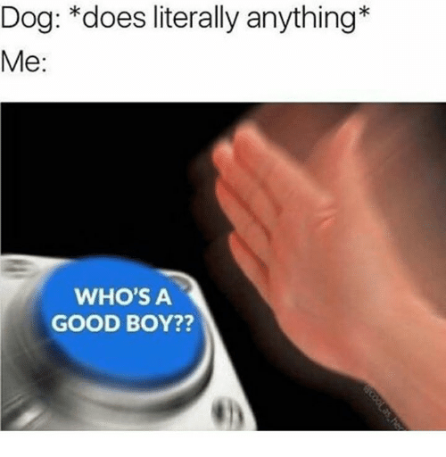 Good, Boy, and Dog: Dog: *does literally anything  Me:  WHO'S A  GOOD BOY??