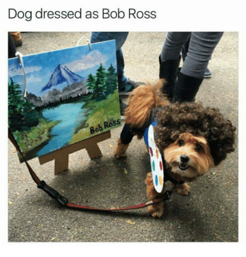 Is Ross Dog Friendly