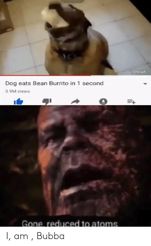 Dog Eats Bean Burrito In 1 Second 39m Views Gone Reduced To Atoms I Am Bubba Bubba Meme On Me Me