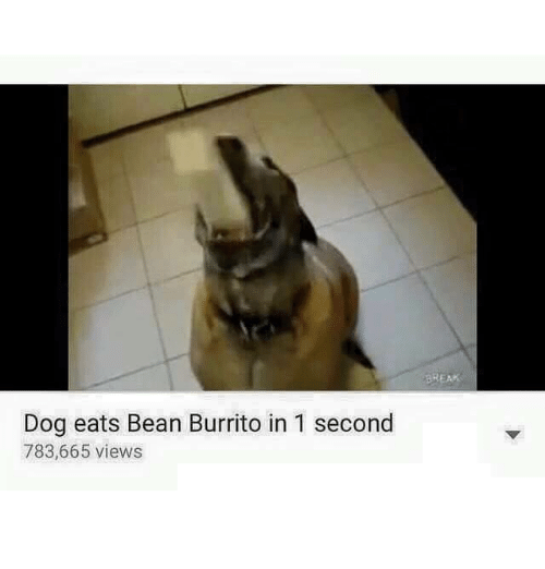 Dog Eats Bean Burrito In 1 Second 783665 Views Dogs Meme On Me Me