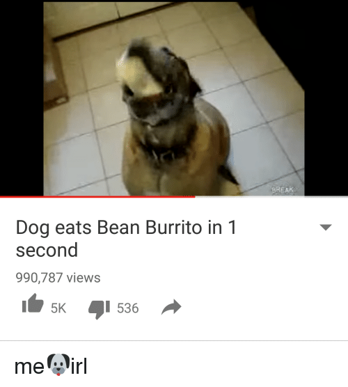 Dog Eats Bean Burrito In 1 Second 990787 Views 5k I 536 Break Me Irl Dogs Meme On Me Me