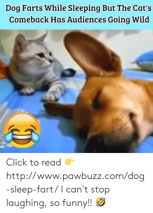 3458bc6f95 Cats, Click, and Funny: Dog Farts While Sleeping But The Cat's Comeback Has