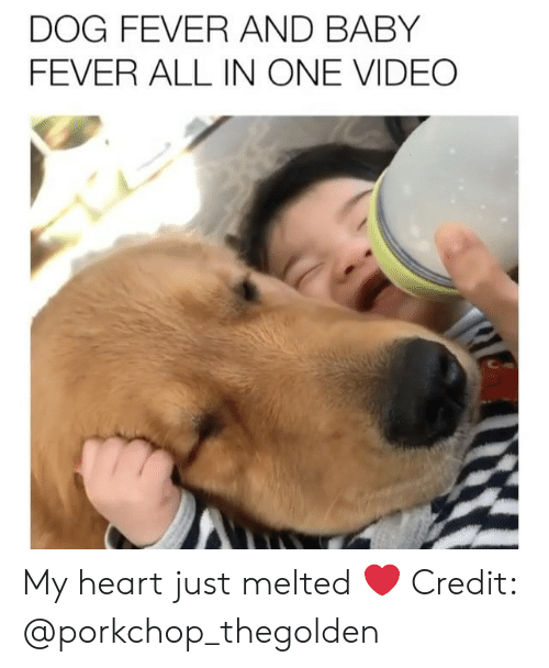 Memes, Heart, and Video: DOG FEVER AND BABY  FEVER ALL IN ONE VIDEO My heart just melted ❤️ Credit: @porkchop_thegolden