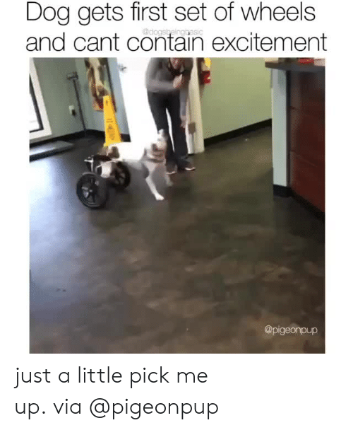 Instagram, Target, and Blank: Dog gets first set of wheels  and cant contain excitement  @dogsbeinggasic  @pigeonpup just a little pick me up. via @pigeonpup