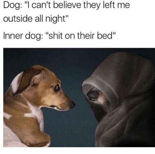 dog i cant believe they left me outside all night 7187752 ✅ 25 best memes about dank memes dank memes,Dank Memes Dog