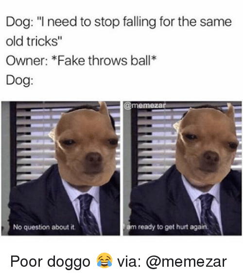 Popular Fake Throw Ball Adorable Dog - dog-i-need-to-stop-falling-for-the-same-old-19792857  Collection_472876  .png
