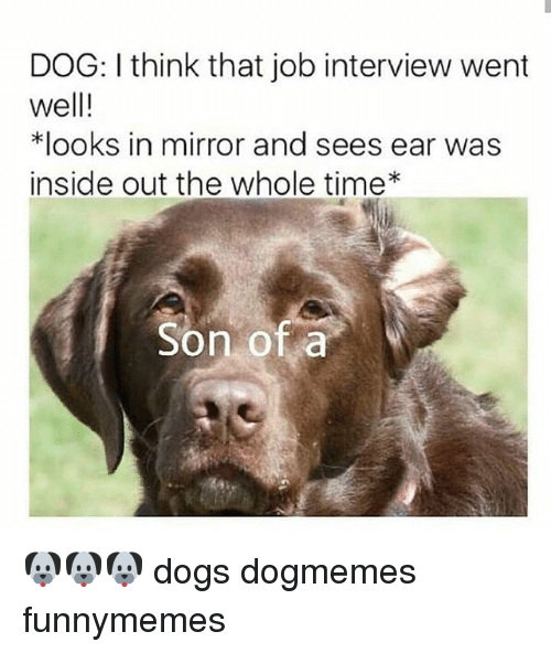 dog looking in mirror. dogs, funny, and inside out: dog: i think that job interview went dog looking in mirror