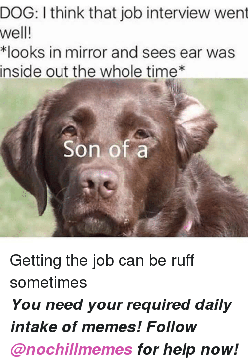 Inside Out, Job Interview, and Memes: DOG: I think that job interview went  well!  *looks in mirror and sees ear was  inside out the whole time*  Son of a Getting the job can be ruff sometimes  <p><b><i>You need your required daily intake of memes! Follow <a>@nochillmemes</a>​ for help now!</i></b><br/></p>