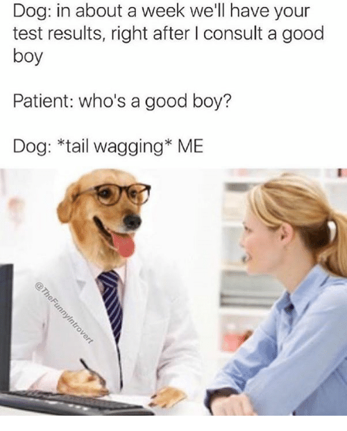 Dank, Good, and Patient: Dog: in about a week we'll have your  test results, right after I consult a good  boy  Patient: who's a good boy?  Dog: *tail wagging* ME