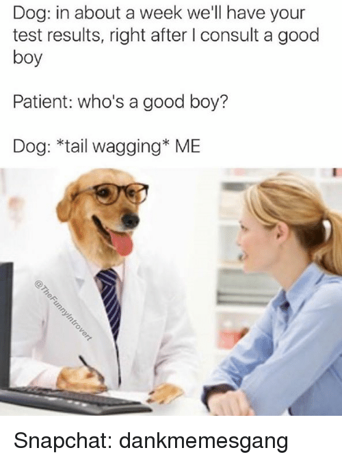 Memes, Snapchat, and Good: Dog: in about a week we'll have your  test results, right after I consult a good  boy  Patient: who's a good boy?  Dog: *tail wagging ME Snapchat: dankmemesgang