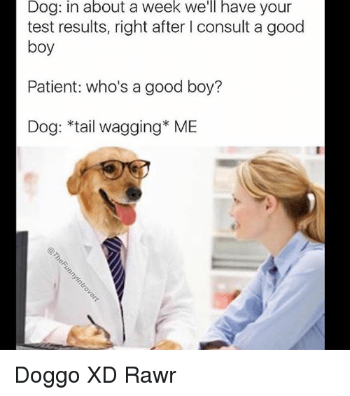 Memes, Good, and Patient: Dog: in about a week we'll have your  test results, right after I consult a good  boy  Patient: who's a good boy?  Dog: *tail wagging* ME Doggo XD Rawr