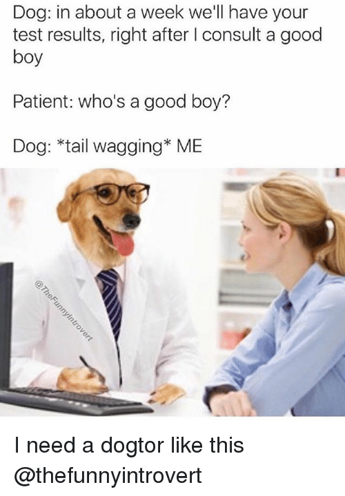 Memes, Good, and Patient: Dog: in about a week we'll have your  test results, right after I consult a good  boy  Patient: who's a good boy?  Dog: *tail wagging* ME I need a dogtor like this @thefunnyintrovert