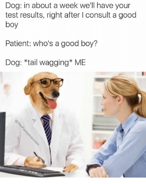 Good, Patient, and Test: Dog: in about a week we'll have your  test results, right after I consult a good  boy  Patient: who's a good boy?  Dog: *tail wagging ME