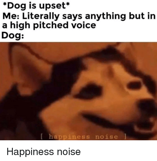 Voice, Happiness, and Dog: *Dog is upset*  Me: Literally says anything but in  a high pitched voice  Dog:  [ happiness noise Happiness noise