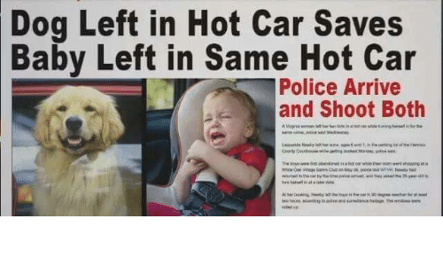 Police Dogs Left In Hot Car