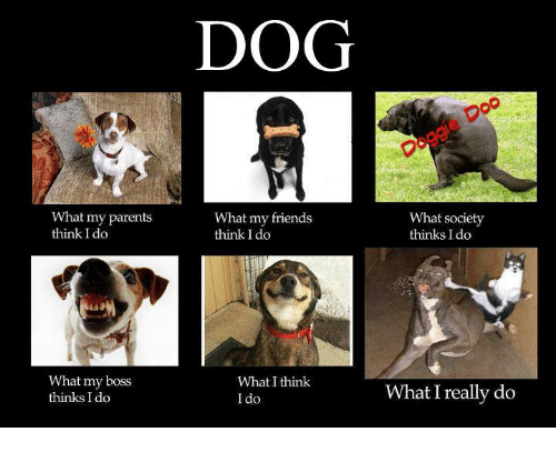 DOG Ogeie Doc What My Parents Think I Do What My Friends ...