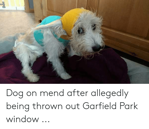 Dog On Mend After Allegedly Being Thrown Out Garfield Park Window Garfield Meme On Me Me